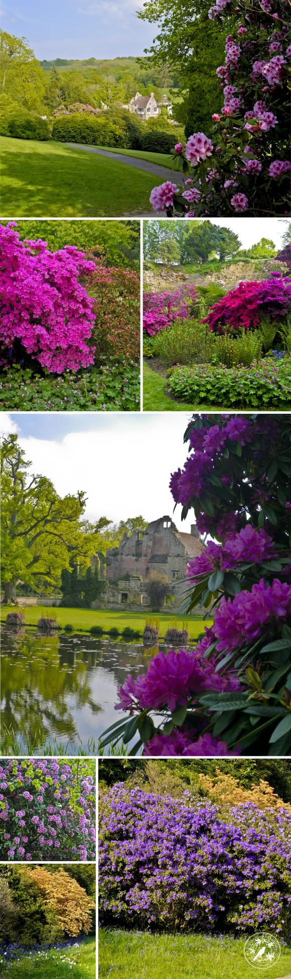 RhododendronCollage